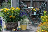 Terrasse mit Sonnenauge 'Sole d'Oro', Johanniskraut, Mehlsalbei, Zauberschnee und Studentenblumen, Strauß aus Ringelbumen und Mehlsalbei