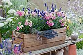 Holzkasten mit Lavendel und Löwenmäulchen 'Madame Butterfly', Strauß aus getrocknetem Lavendel