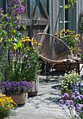 Insektenfreundliche Terrasse mit blühendem Basilikum, Scheinsonnenhut, Malve, Fächerblume 'Violet Blue', Zweizahn 'Bee White', Tagetes und Sessel