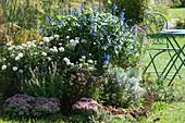 Herbstbeet mit Chrysantheme 'White Bouquet', Salbei-Hybride Rockin 'True Blue', Bergminze, Dost, Fetthenne und Wermut Makana 'Silver'