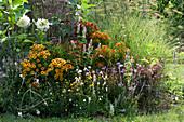 Buntes Beet mit Sonnenbraut 'Flammenrad' 'Rubinzwerg' 'Rotgold'  'Moerheim Beauty', Dahlie 'My Love', Duftnessel, Prachtkerze, Färberkamille und Strauchbasilikum