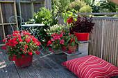 Stehende Geranie 'Sarita Dark Red' im roten Holzkübel, Punktblume Hippo 'Red', Paprika, Hängegeranie, Zweizahn Bee 'White' und Jasminblütiger Nachtschatten, kleine Sitzgruppe und Sitzkissen