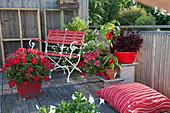 Stehende Geranie 'Sarita Dark Red' im roten Holzkübel, Punktblume Hippo 'Red', Paprika, Hängegeranie, Zweizahn Bee 'White' und Jasminblütiger Nachtschatten