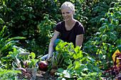 Frau erntet gelbe Bete 'Burpees Golden' im Gemüsegarten