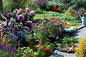 Beet mit Lampionpflanze, Herbstaster, Dahlie, Herbstanemone, Federborstengras, Rotgras 'Red Baron', Fetthenne und Ziersalbei 'Ignition Purple', silberne Schale mit Flasche und Gläsern