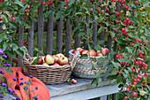 Körbe mit frisch gepflückten Äpfeln auf Bank am Gartenzaun