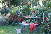 Sitzplatz im Garten mit frisch geernteten Tomaten, Karotten und Weintrauben