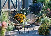 Spätsommer-Terrasse mit Sonnenhut 'Goldsturm', Chrysanthemen, Enzianbaum, Gewürztagetes, Rotgras, Bergminze, Chinaschilf, Dahlie