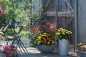 Spätsommer-Terrasse mit Strohblumen 'Totally Yellow', Scheinsonnenhut Conetto 'Orange', Chili 'Bolivian Rainbow', Rotgras 'Red Baron' und Eisenholzbaum