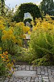 Goldruten überwachsen den Weg im Garten