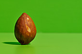 Whole brown seed of ripe avocado fruit placed on bright green background