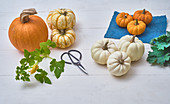 Getting ready for pumpkin pie after harvesting the pumpkins
