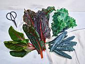 Kale, Rainbow Chard, Chard