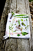 Meadow herbs on a white cloth