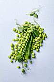 Heap of young sweet organic green pea in pods with sprouts over grey background