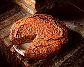 Rustic walnut chocolate cake