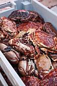 Crabs at a market (Santa Barbara, California)