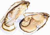 Two raw oysters
