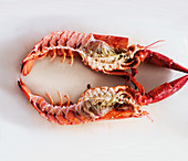 A halved lobster on a white surface