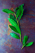 Fresh bay leaves on a metal surface