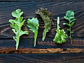 Lettuce leaves on old boards