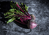 Fresh beets with beet greens on a gray background