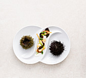 Sea urchins with caviar, buttermilk and romaine lettuce