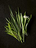Wild yarrow, wild ribwort plantain, wild garlic