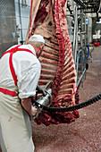 Rinderhälften zerlegen