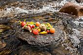 Huchen im Eisenkrautsud, Tomberry, konfierte Zucchini und Wassermelone