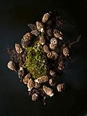 Morel mushrooms with moss