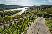 A footpath to the Rolandsbogen, Remagen, North Rhine-Westphalia, Germany