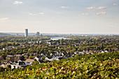 Vineyards looking down on the district of Bad Godesberg, Bonn, North Rhine-Westphalia, Germany