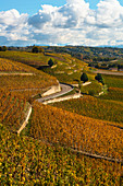 Hermitage terraced vinyards in Tain Hermitage, France (Autumn)