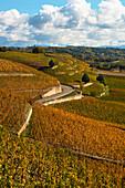 Terrassenförmig angelegte herbstliche Weinberge in Tain Hermitage, Frankreich