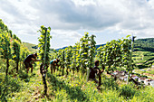 Workers in a vineyard, Baden-Württemberg, Germany