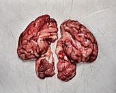Raw pork brains