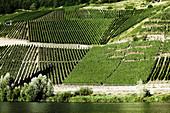 Weinlandschaft, Weingut Grans Fassian, Rheinland-Pfalz, Deutschland
