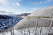 Winterliche Weinlandschaft, Weingut Meyer-Näkel, Rheinland-Pfalz, Deutschland