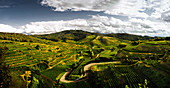 Weinlandschaft, Kaiserstuhl, Baden, Baden-Württemberg, Deutschland
