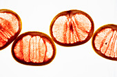 Transculent pink grapefruit slices