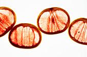 Durchleuchtete rosa Grapefruitscheiben