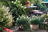Herbstterrasse: Gartennelken Devon Cottage 'Blush' in Terracotta-Töpfen, Strauchbasilikum, Jasmin-Nachtschatten, kleine Sitzgruppe und bunte Tischdekoration