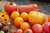 Tomatenvielfalt: gelbe runde Tomate, gelbe Fleischtomate, rote runde Tomate, Cocktailtomate 'Black Zebra' und Flaschentomate
