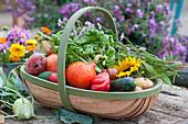 Frisch geerntetes Gemüse im Korb: Hokkaido-Kürbis, Tomaten, Mangold, Gelbe Bete, Gurken, Kartoffeln, Kohlrabi, Blüten von Sonnenblume und Herbstaster