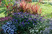 Beet mit Herbstastern 'Aqua Compact' 'Azurit', Fetthenne 'Herbstfreude', Peperoni 'Lila Luzi' und Glockenchili 'Bishop's Crown', Japanisches Rotgras 'Red Baron' und Zweizahn 'Bee White'