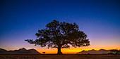 Sunset behind tree, Namibia