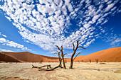 Dead trees in desert, Namibia