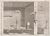 Galvani's frog legs experiments, illustration