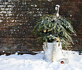 Christmas tree in trash can outdoors